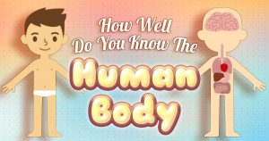 How Well Do You Know The Human Body?